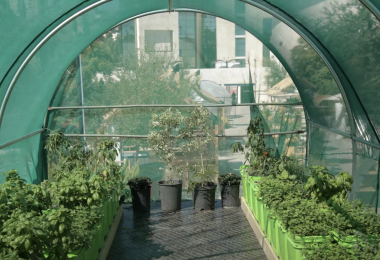 Amman Design Week 2019 Future Food Future City